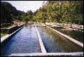 Trout Farm - Bambito.